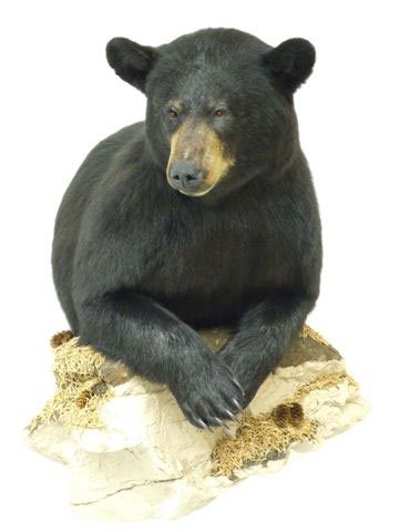 photo of front half black bear project finihed
