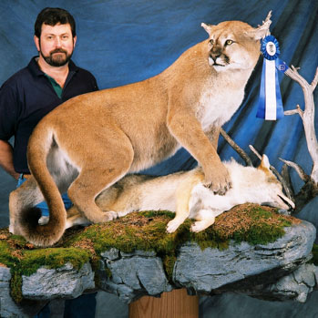 Award winning taxidermist, John Gordon, with cougar mount.